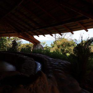 trees outside of yoga pavilion