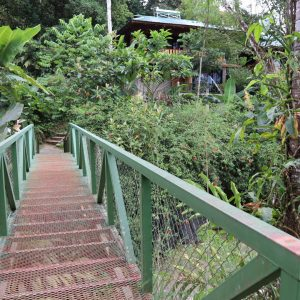 stairway with green handle in jungle
