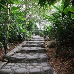 stone path costa rican jungle
